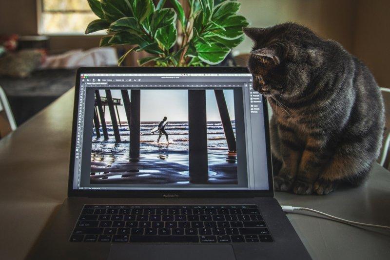 Un gato mira la fotografía de un surfista que se ve en la pantalla del laptop