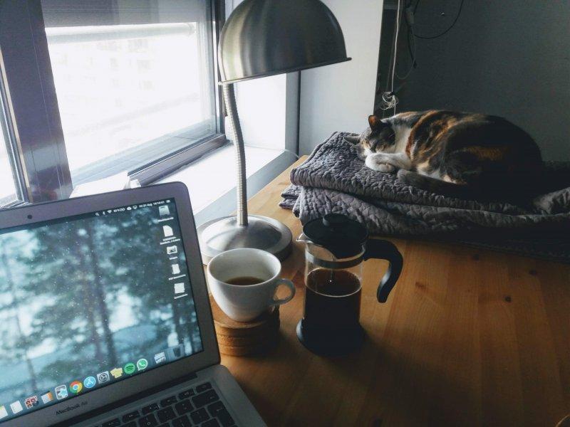 Un gato duerme sobre una manta al lado de un ordenador portátil en casa de un teletrabajador